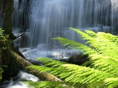 water fall in rain forest in australia with fern leaves