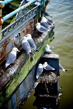 More Seagulls on Mumbles Pier by mr-numb, via Flickr