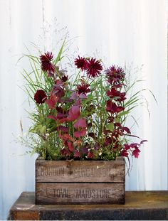 Creative containers for late summer | Gardens Illustrated