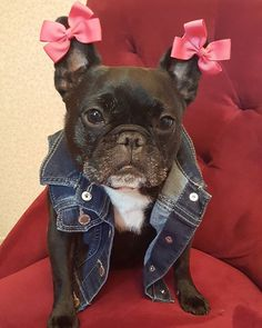 Cosette  Was up, everypawdy? Do you like my new look? I've decided to become a tough and ferocious biker bitch so that I can stand up to my bully big sister who likes to boss me around and steal my stuff. I'm gonna go find a gang to join now!! Watch out, Rue!! #LittleSisterFightsBack  #BikersWearBowsRight ❓  #cocoandkanga