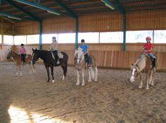 Salzburg, Goats, Horses, Animals, Products, Horseback Riding, Animales, Animaux, Animal