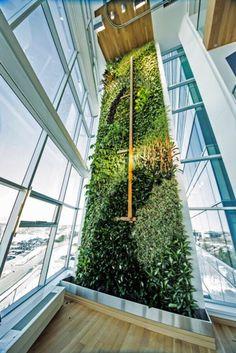 Tall Living Green #greenwall #verticalgarden