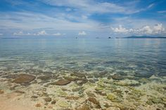Maliangin Island, Sabah, Borneo