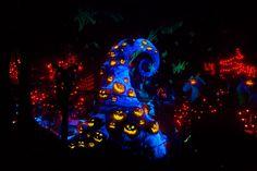 Disneyland at Halloween! Haunted Holiday Mansion at Disneyland Resort Time Travel, Places To Travel, Places To Go, Disney Vacations, Disney Trips, Disney Parks, Disney Fun, Walt Disney, Honeymoon Spots