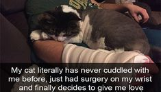 These Snapchats Of Cats Loving Their Humans Remind Us Why We Adore Them So Much