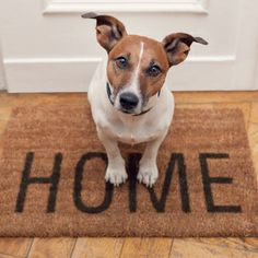 Want to find the perfect pad for your #pet? Select 'Pets Allowed' or 'Pet Park' filters on ApartmentGuide.com to refine your search! | #apartment #find #forrent #rent #dogpark #pets #petfriendly