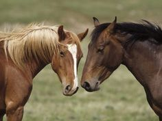 Horse Wallpapers HD Horses Wallpapers   Beautiful Cool Wallpapers