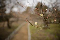 Slightly Different Focus  --  Kitano Tenmangu Shrine (北野天満宮)  --  Kyoto, Japan  --  Copyright 2013 Jeffrey Friedl, http://regex.info/blog/  ...