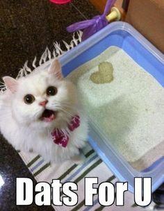 haha oh cats.