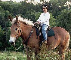 Big Belgian Mule