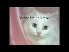 ▶ Meine Kleine Katze - Deutsches Katzen Kinderlied - German Cat Children Song - YouTube