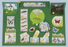 Projektplan Schmetterling-Lapbook
