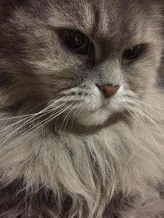 愛猫さくら姫 SHOOP+FACTORY(シュープ・ファクトリー)@オーナーブログ-7ページ目