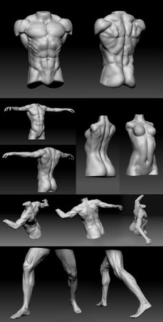 Exceptional Drawing The Human Figure Ideas. Staggering Drawing The Human Figure Ideas. Anatomy Study, Body Anatomy, Anatomy Art, Human Anatomy, Zbrush Anatomy, Anatomy Sketches, Anatomy Drawing, Body Reference, Anatomy Reference