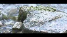 echogreen festival 2015 - il trailer