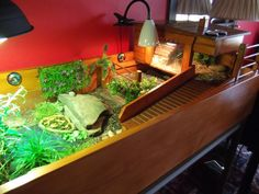 Lots for a tortoise to do in this tort table. Tortoise Cage, Tortoise House, Tortoise Habitat, Baby Tortoise, Sulcata Tortoise, Tortoise Turtle, Tortoise Food, Turtle Enclosure, Tortoise Enclosure