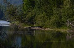 The Great Blue Heron Blue Heron, Environment, Fairy, River, Wood, Outdoor, Outdoors, Woodwind Instrument, Timber Wood