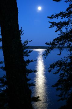 Upper Whitefish Chain, MN  My cabin is on that lake & that's one of my favorite views :) happy someone pinned this photo