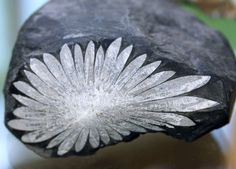 Crystals (xenotime, Zircon) Arranged In A Radiating Polished Slice Of Rock - Chrysanthemumstone