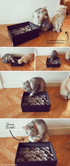 """Envie de stimuler votre chat ? Faites d'une pierre 2 coups avec ce super DIY qui vous montre comment créer une gamelle pour chats """"interactive"""" !"""