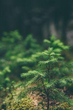 Green Moss Flower Nature #iPhone #4s #wallpaper