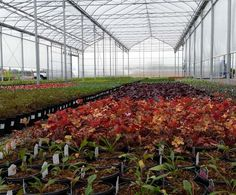 Commercial greenhouses built to last. GGS has been a world-class designer, manufacturer, and installer of commercial greenhouse structures since 1979.
