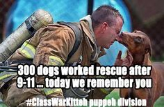 300 dogs worked rescue after #911 today we remember you #ClassWarKitteh (puppeh division)