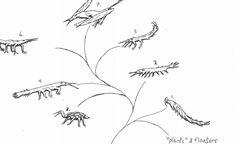 Nudivermia Clade by Whachamacallit1.deviantart.com on @DeviantArt