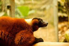 Brown Bear, Animals, Nature, Animaux, Animal, Animales, Animais