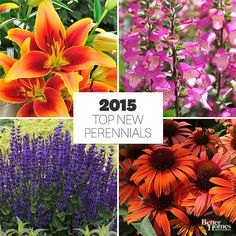 There's a new crop of perennial flowers ready for you to try in your garden. Here's a look at some of our favorite newcomers. Watch for them in garden centers this spring.