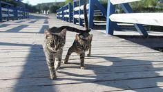 Pisicile de la Gura Portitei