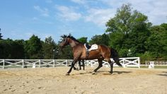 Lunging Reno before a clinic