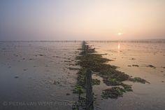 sunrise at wierummer wad - null