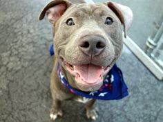 ESCOBAR aka ALEX -A1042766 SUPER URGENT!!!! 2 BE DESTROYED TONIGHT 7/28/15, BUT THERE MIGHT STILL BE TIME! HOW TERRIFIED, SCARED, HEARTBROKEN N FRIGHTENED THESE POOR ANIMALS MUST BE! WE HAVE A CHOICE, WE CAN BE THEIR VOICE, WE CAN CHOOSE LIFE, NOT DEATH! WE R HIS ONLY HOPE IN SURVIVING! SAY YES TO COMPASSION FOR ESCOBAR'S LIFE!