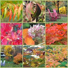 Don't wait till fall to heat up your autumn landscape. Shop for hot fall foliage plants this spring. 12 great ones.