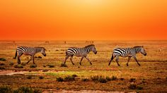 Verbringe 13 Nächte in unterschiedlichen Hotels und Gasthäusern in den schönsten Orten Südafrikas. Im Preis ab 1'499.- sind das Frühstück, ein Mietwagen, der Transfer sowie der Flug inbegriffen.  Hier kannst du den tollen Ferien Deal buchen: http://www.ich-brauche-ferien.ch/ferien-deal-2-woechige-suedafrika-rundreise-fuer-nur-1499-buchen/