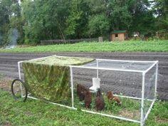 lightweight chicken tractor