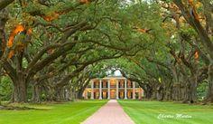 Oak Alley Plantation A True Southern Wedding Location