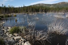 Alaska - weltreisewelt Indian Summer, Alaska, Fjord, Water, Outdoor, National Forest, Travel, Gripe Water, Outdoors