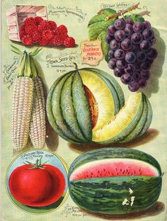 http://americangardenhistory.blogspot.se/search/label/Catalogs on Seeds and Plants