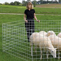 Sturdy, hot-dip galvanized wire panels are great for lambing and kidding pens, gates, fence lines and many other projects. Welded Wire Panels, Pig Showing, Front Deck, Farm Fence, Farm Life, The Originals, Homesteading, Sheep, Goats