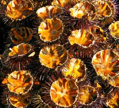 Sea urchins : best sauce for spaghetti