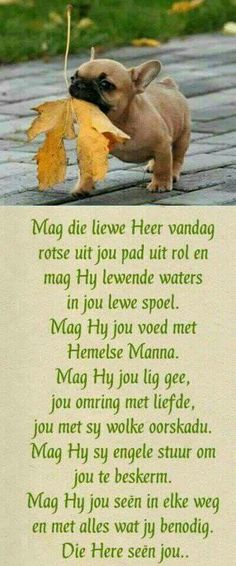 Die Here seën jou. Good Morning Prayer, Good Morning Messages, Good Morning Good Night, Good Morning Wishes, Good Morning Quotes, Christian Pictures, Christian Quotes, Christian Women, Prayer Quotes