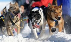 The 2017 Iditarod Trail Sled Dog Race gets underway with the traditional ceremonial start in Anchorage.