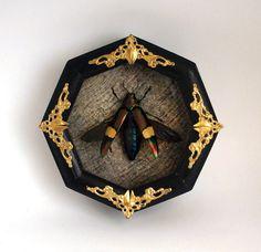 Jewel Beetle taxidermy in octagon shadowbox / real by TarantulaBox