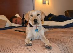 This Is Me At A Pet Friendly Motel 6 Did You Know All Motel 6 Allow