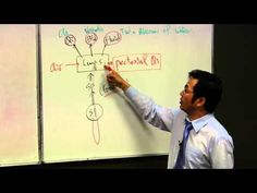 LUNG, Lung function, tcm theory, tcm lecture, diagnosis - YouTube