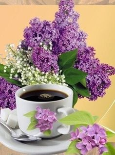 Coffee Break, Coffee Time, Good Morning Images Flowers, Ikebana Arrangements, Beautiful Rose Flowers, Unusual Plants, Good Morning Greetings, Day For Night, Beautiful Pictures