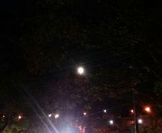 Full moon peaking through the trees