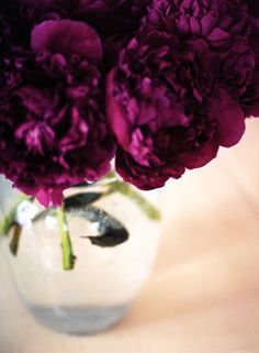 dark magenta peonies for the bridal bouquet Purple Love, All Things Purple, Purple Rain, Shades Of Purple, Deep Purple, Magenta, Purple Peonies, Purple Flowers, Color Uva